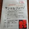 調理用トマト・サンマルツァーノ種を購入!夏野菜の育苗初挑戦です…