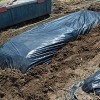 春野菜用の畝立て開始!黒マルチで保温、防草してもらいます