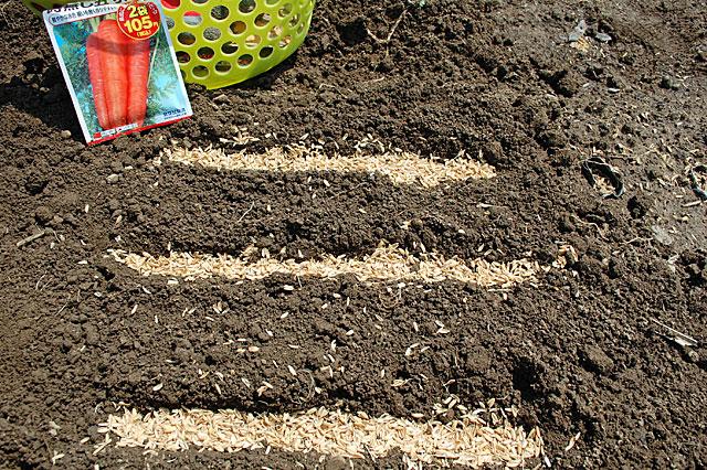 carrot-seeding