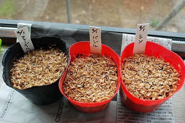 companion-seeding3