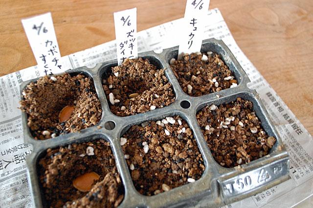 sukuna-seeding2