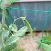 春蒔きスナップエンドウの追肥!開花頃に1回施肥して様子を見ます